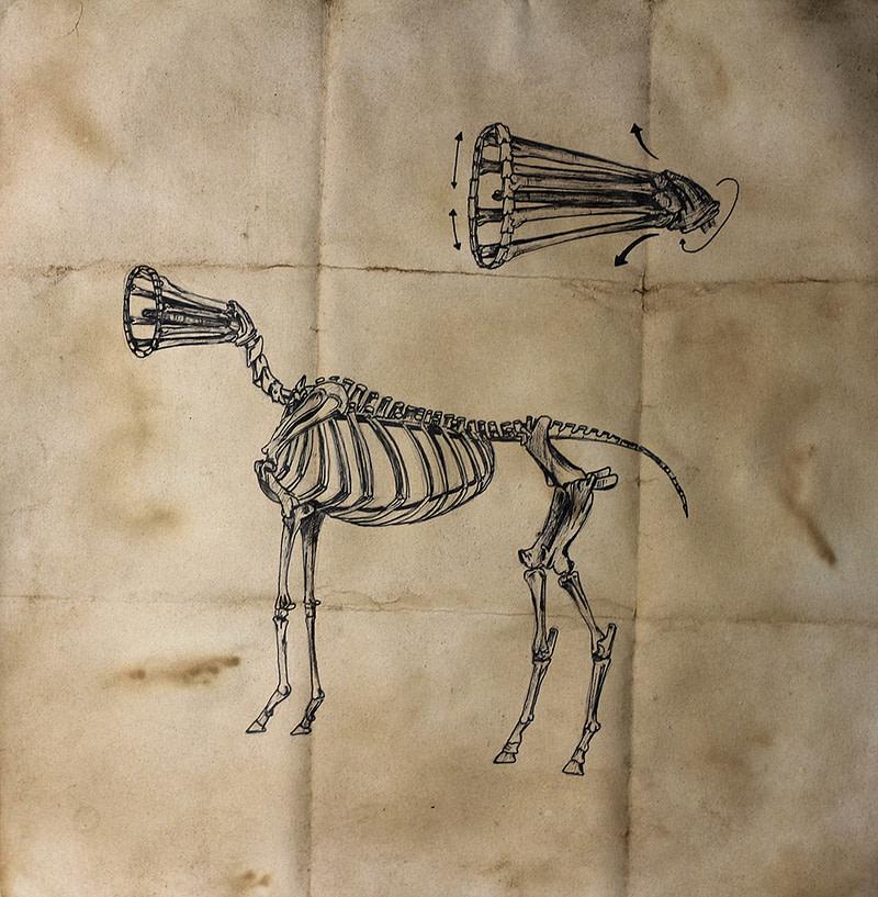 Equus ferus sonitus (1)