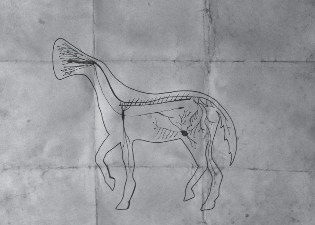 The Mythology of Runcuk Horse and Its Transformation