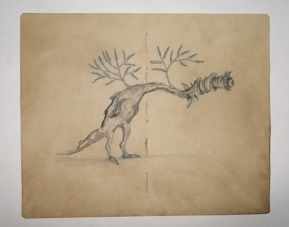 Drawing Study of Flora and Fauna in Tanah Runcuk (Excerpted from Stern's Manuscript & Journal)