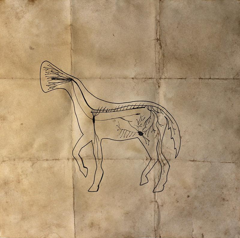 Equus ferus sonitus (2)